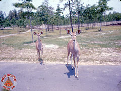SFGA3 KUDU ND 0002 copy