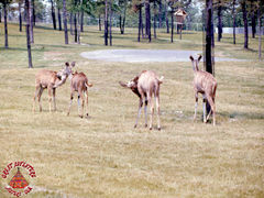SFGA3 KUDU ND 0003 copy