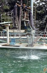 Dolphin Show 1979
