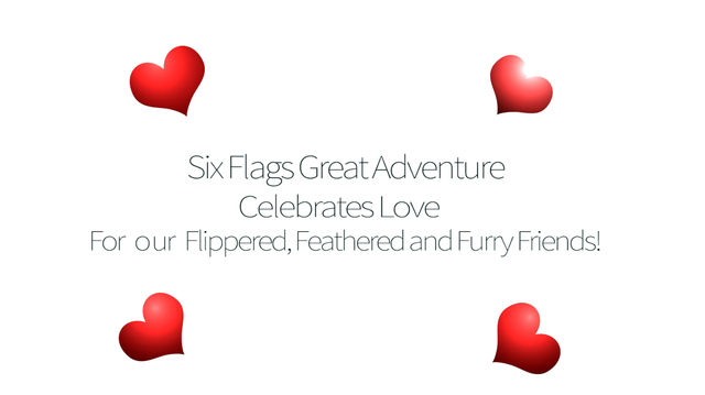 VIDEO  Six Flags Celebrates Love For Animals