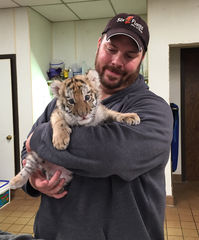 PHOTO  Dr Ken Keiffer holding tiger Cub Nadya