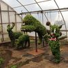 PHOTO   SFGAd greenhouses   topiaries 1