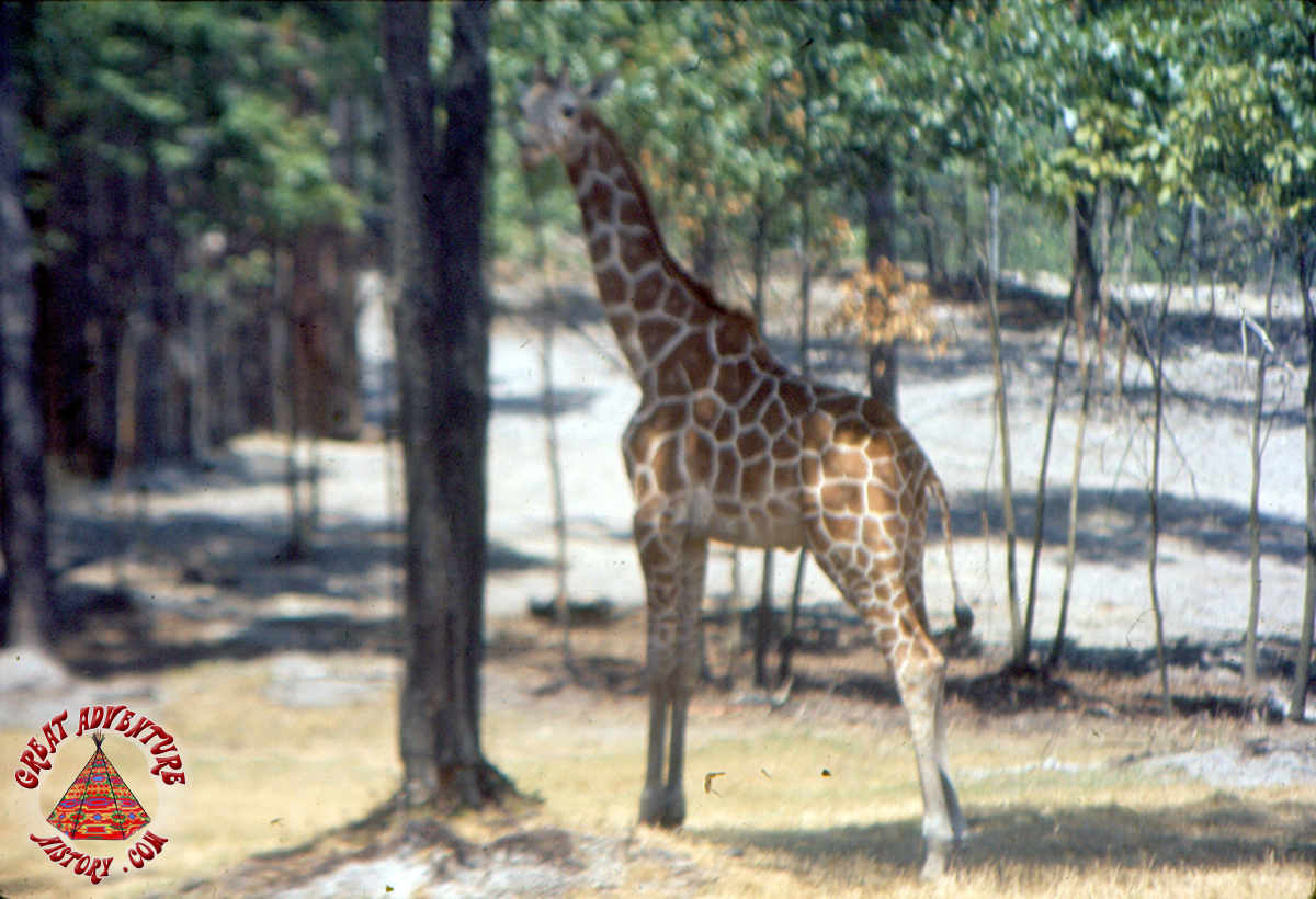 EB Safari JUL74 0014 copy