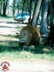 SFGA3_LION_SEP76_0005 copy.jpg