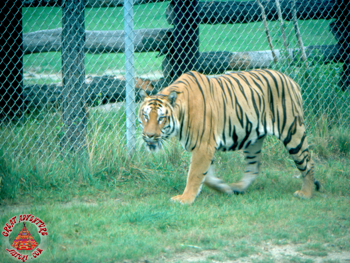 SFGA3 TIGER AUG76 0010 copy