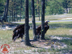 SFGA3 VULTURES ND 0001 copy