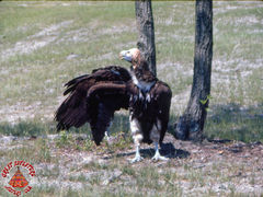 SFGA3 VULTURES ND 0004 copy