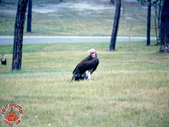 SFGA3 VULTURES ND 0003 copy